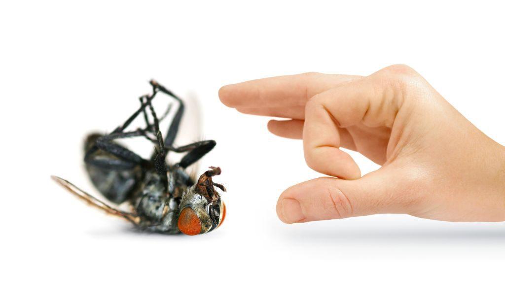 Usuwanie owadów to dezynsekcja Białystok