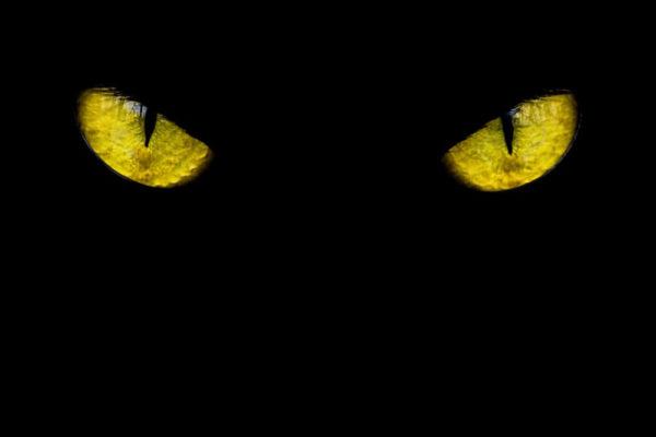 czarny kot zwalczający myszy