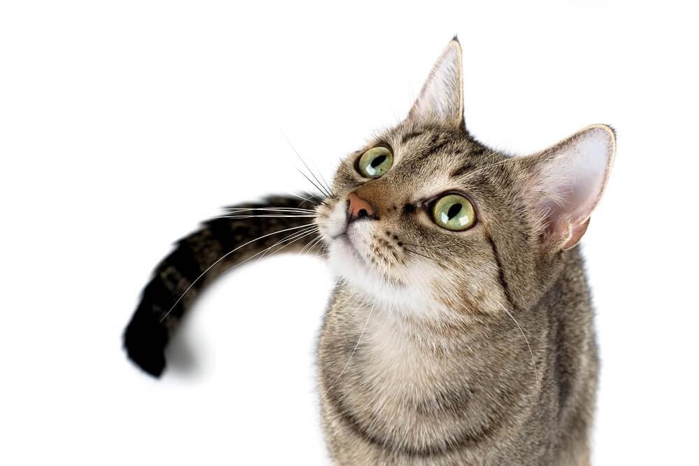 kot najlepszy na gryzonie