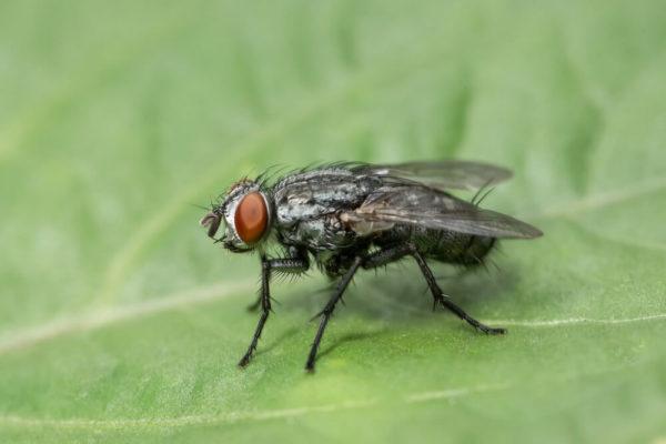 Zwalczanie muchy Białystok