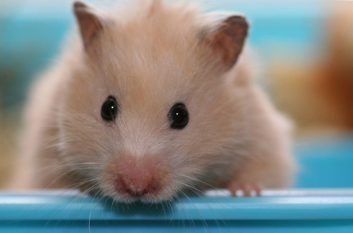 Deratyzacja likwidacja gniazd szczurów Ełk