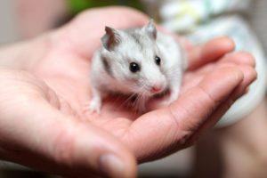Deratyzacja tępienie szczurów Białystok