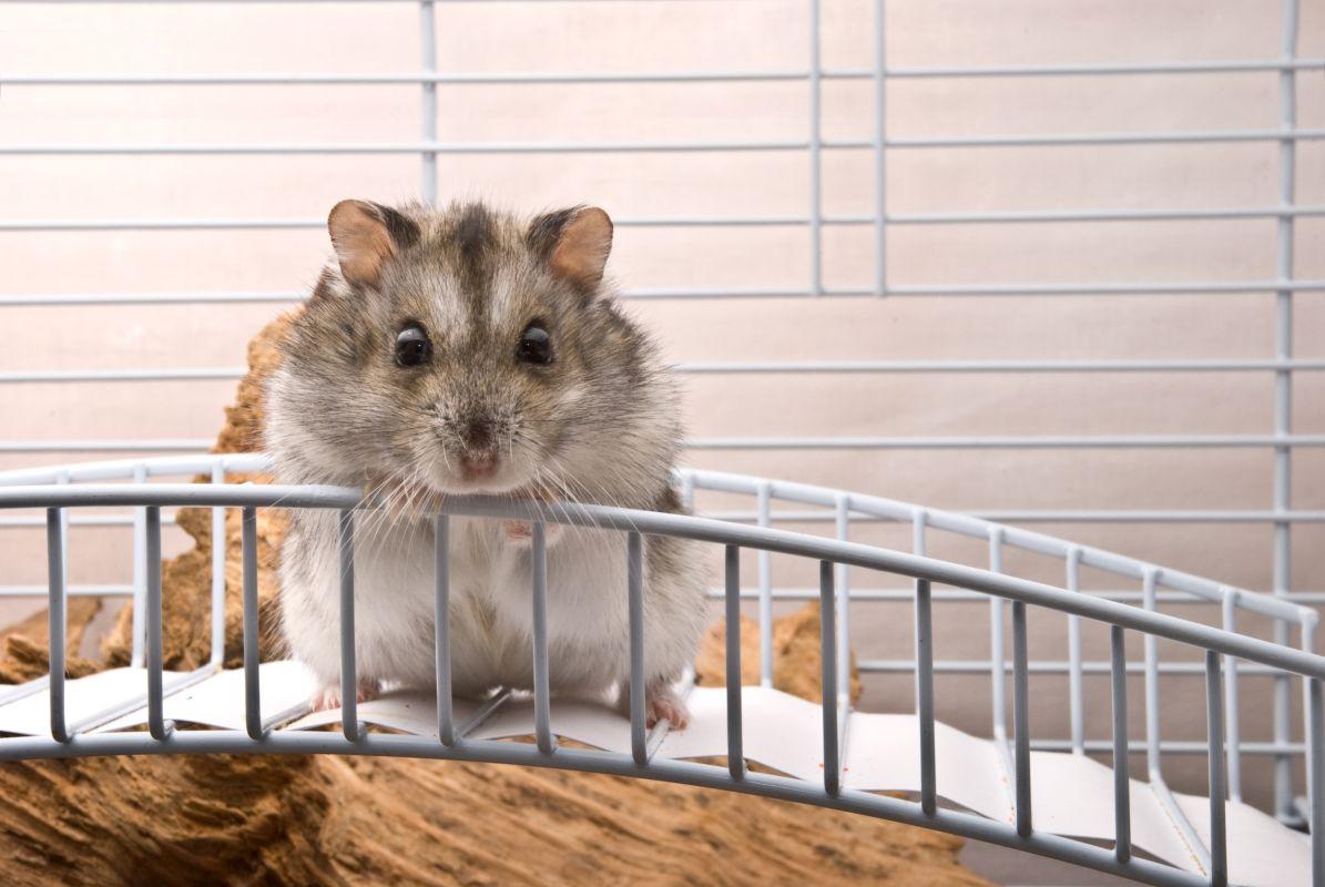 Deratyzacja zwalczanie myszy Łomża