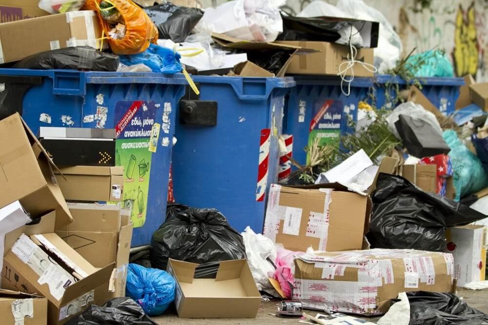 szczury do zwalczenia w śmieciach