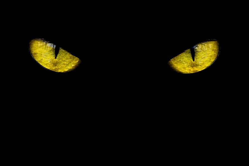 czarny kot na zwalczanie myszy